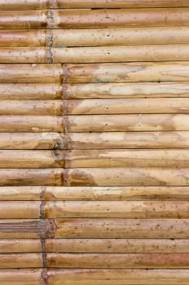 b2ap3_thumbnail_bamboo