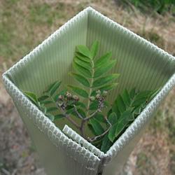 Tree & Shrub Protection